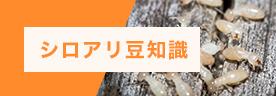 シロアリ豆知識